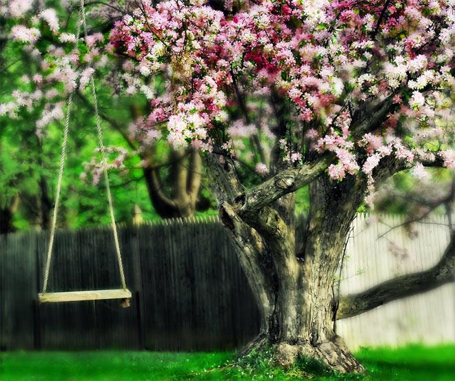 Copacii demni se inalta in 30 de poze minunate! - Poza 2