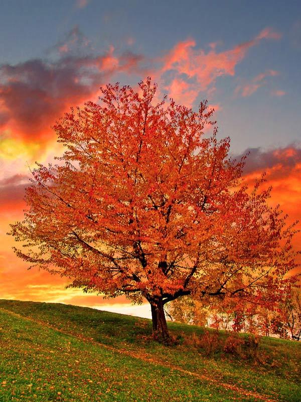 Copacii demni se inalta in 30 de poze minunate! - Poza 21