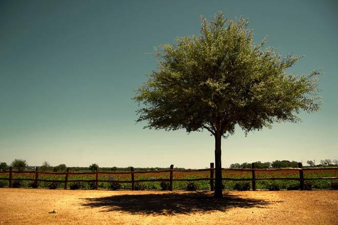 Copacii demni se inalta in 30 de poze minunate! - Poza 23