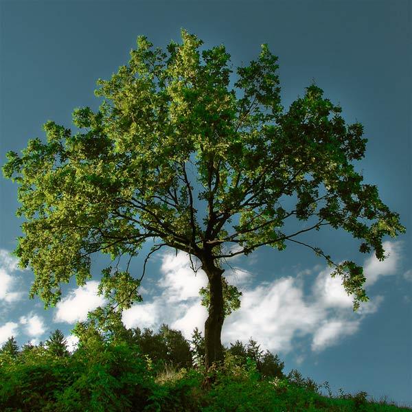 Copacii demni se inalta in 30 de poze minunate! - Poza 24