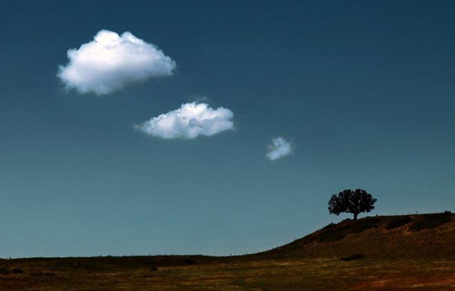 Copacii demni se inalta in 30 de poze minunate! - Poza 25