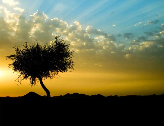 Copacii demni se inalta in 30 de poze minunate! - Poza 26