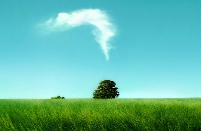 Copacii demni se inalta in 30 de poze minunate! - Poza 27