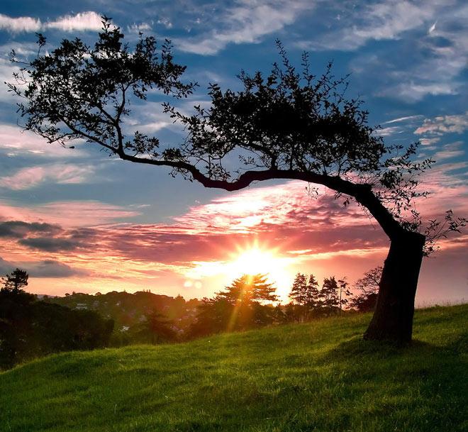 Copacii demni se inalta in 30 de poze minunate! - Poza 28