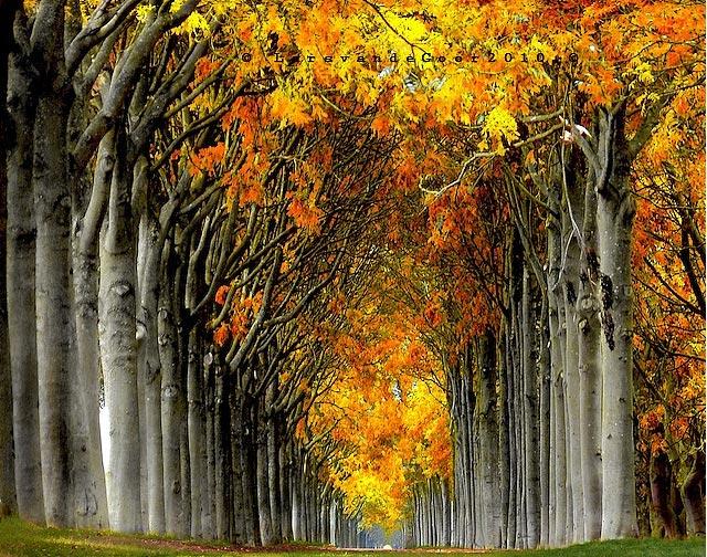 Copacii demni se inalta in 30 de poze minunate! - Poza 3
