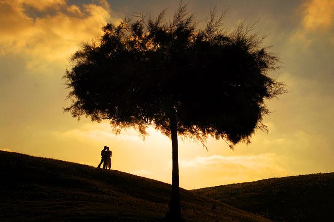 Copacii demni se inalta in 30 de poze minunate! - Poza 30