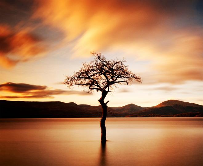 Copacii demni se inalta in 30 de poze minunate! - Poza 5