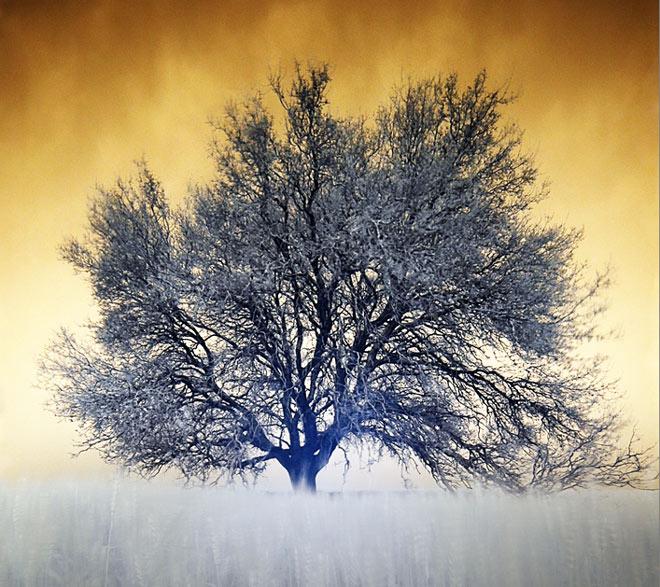 Copacii demni se inalta in 30 de poze minunate! - Poza 6