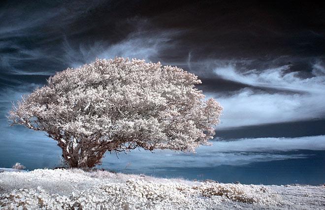 Copacii demni se inalta in 30 de poze minunate! - Poza 7