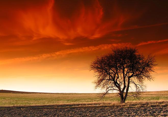 Copacii demni se inalta in 30 de poze minunate! - Poza 9