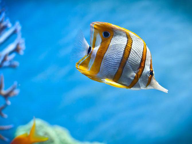 33 de wallpapere cu lumea submarina! - Poza 1