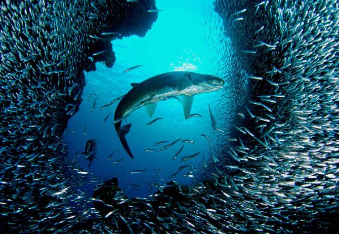 33 de wallpapere cu lumea submarina! - Poza 10