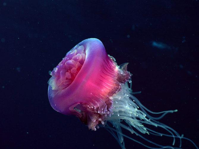 33 de wallpapere cu lumea submarina! - Poza 11
