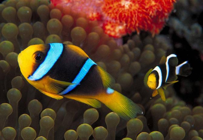 33 de wallpapere cu lumea submarina! - Poza 15