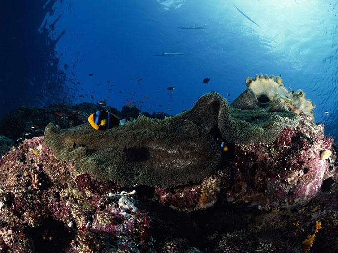 33 de wallpapere cu lumea submarina! - Poza 23