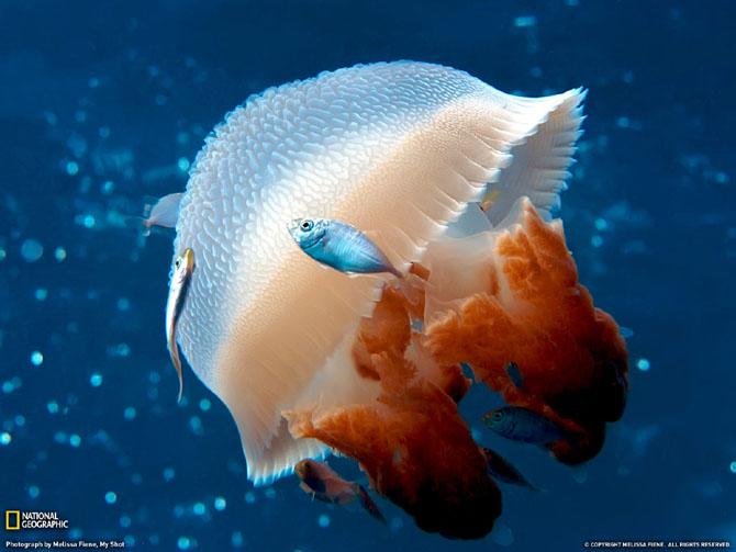 33 de wallpapere cu lumea submarina! - Poza 29
