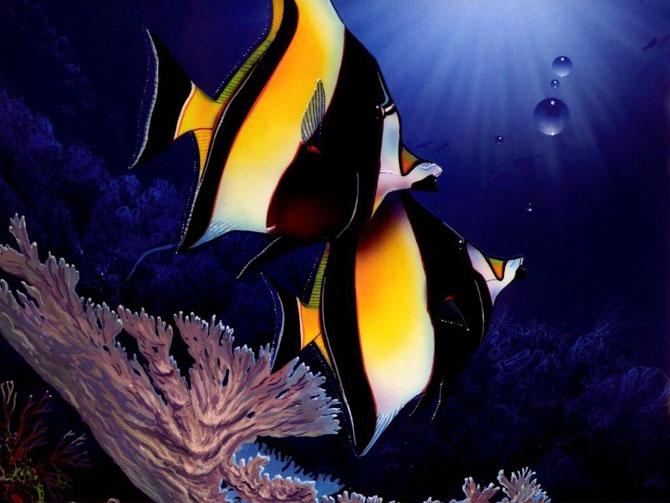 33 de wallpapere cu lumea submarina! - Poza 3
