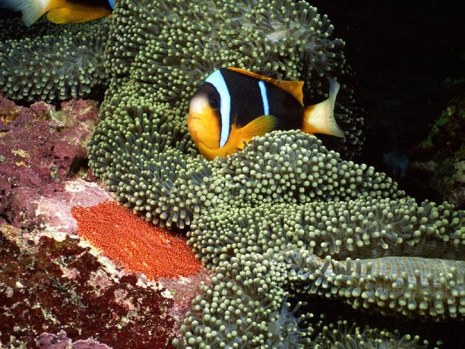 33 de wallpapere cu lumea submarina! - Poza 33