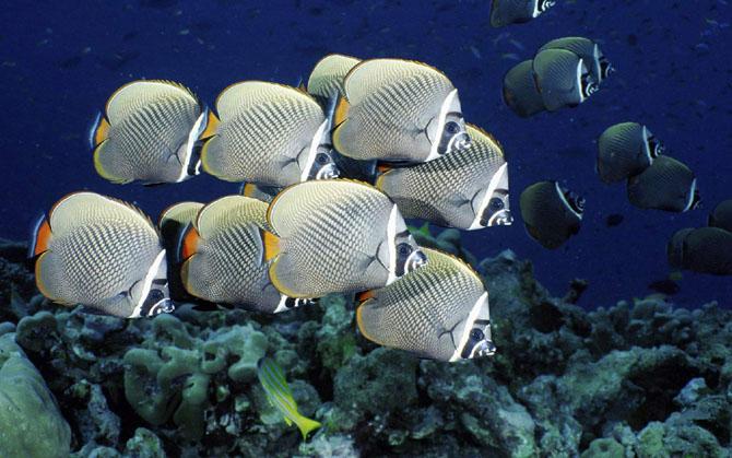 33 de wallpapere cu lumea submarina! - Poza 5