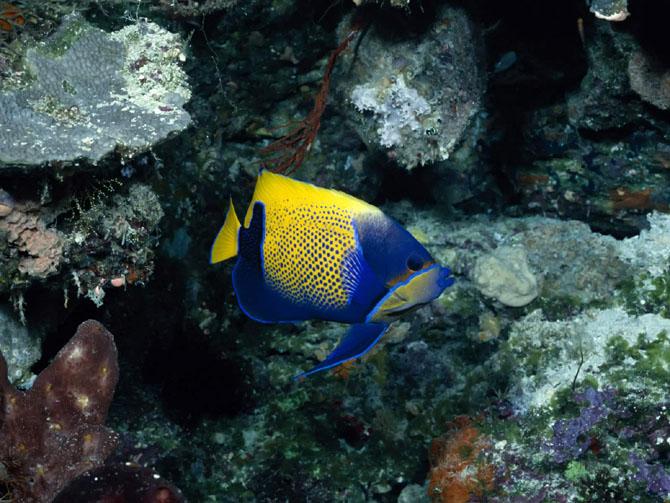 33 de wallpapere cu lumea submarina! - Poza 7