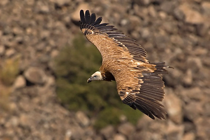 Natura vazuta de Uri Kolker: 28 de fotografii - Poza 1