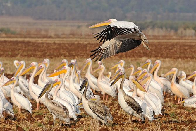 Natura vazuta de Uri Kolker: 28 de fotografii - Poza 10