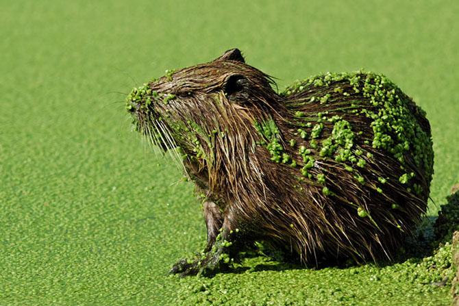 Natura vazuta de Uri Kolker: 28 de fotografii - Poza 11