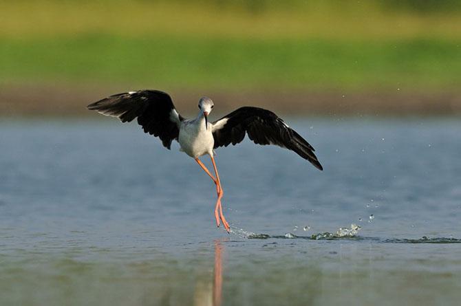 Natura vazuta de Uri Kolker: 28 de fotografii - Poza 12