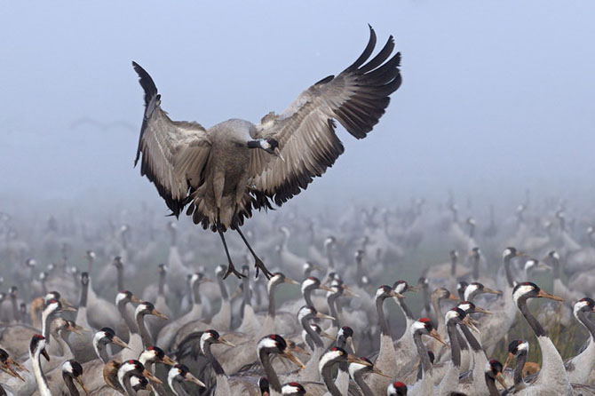 Natura vazuta de Uri Kolker: 28 de fotografii - Poza 14