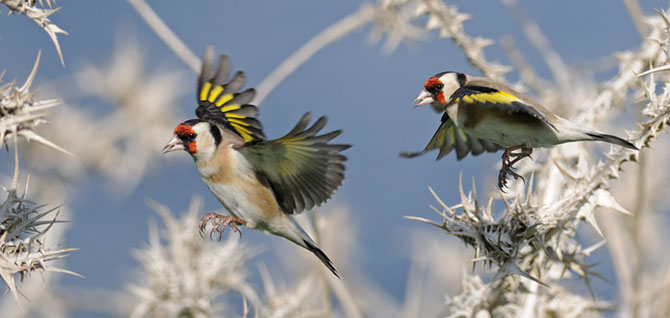 Natura vazuta de Uri Kolker: 28 de fotografii - Poza 15