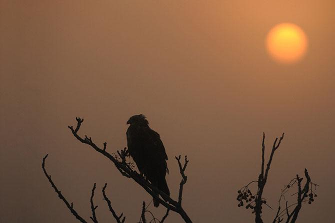 Natura vazuta de Uri Kolker: 28 de fotografii - Poza 16