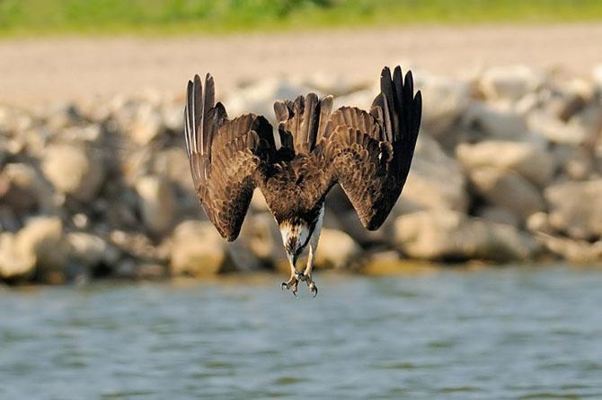 Natura vazuta de Uri Kolker: 28 de fotografii - Poza 17