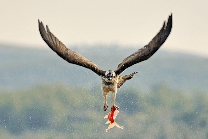 Natura vazuta de Uri Kolker: 28 de fotografii - Poza 18