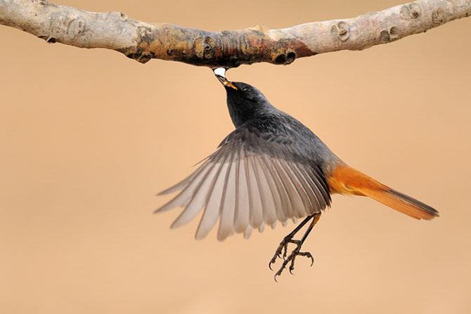 Natura vazuta de Uri Kolker: 28 de fotografii - Poza 19