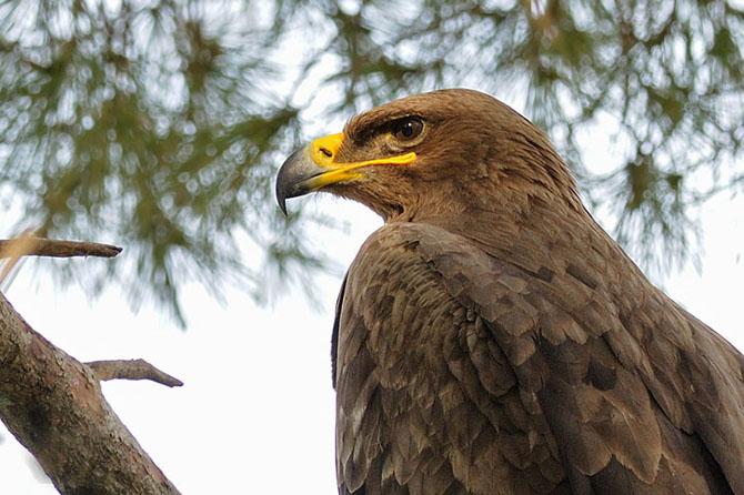 Natura vazuta de Uri Kolker: 28 de fotografii - Poza 2
