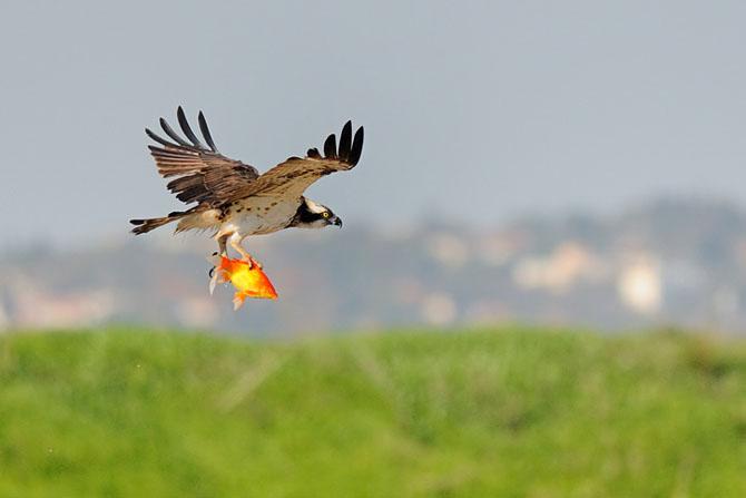 Natura vazuta de Uri Kolker: 28 de fotografii - Poza 20