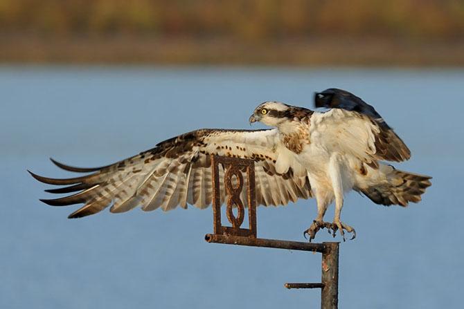 Natura vazuta de Uri Kolker: 28 de fotografii - Poza 21