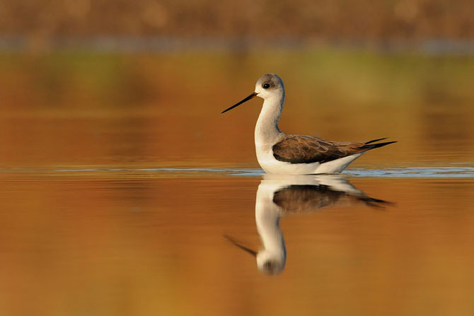 Natura vazuta de Uri Kolker: 28 de fotografii - Poza 22