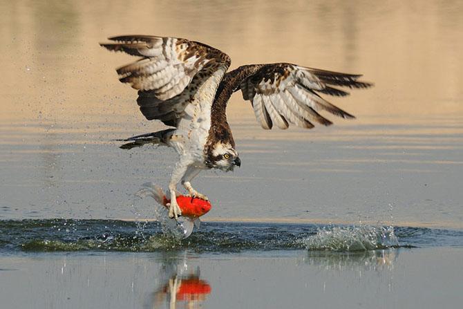 Natura vazuta de Uri Kolker: 28 de fotografii - Poza 23