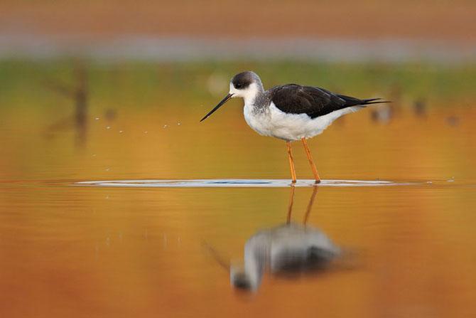 Natura vazuta de Uri Kolker: 28 de fotografii - Poza 24