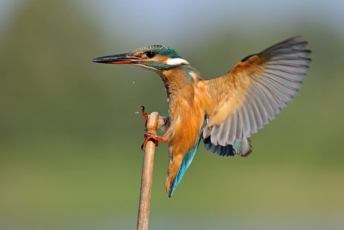 Natura vazuta de Uri Kolker: 28 de fotografii - Poza 25