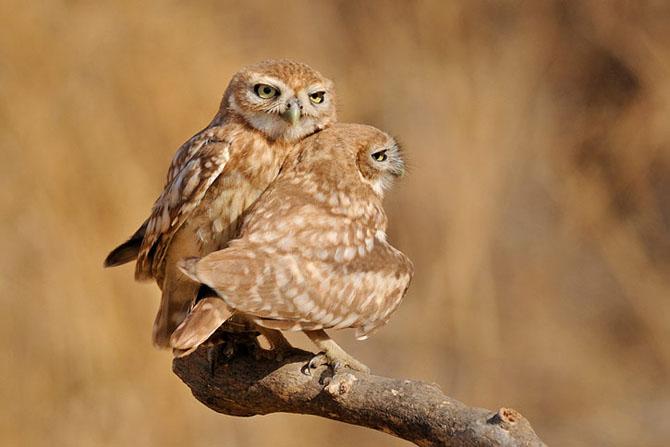 Natura vazuta de Uri Kolker: 28 de fotografii - Poza 26