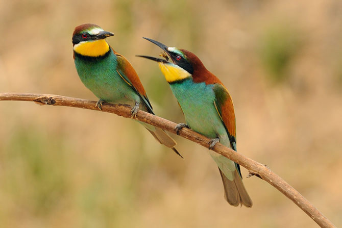 Natura vazuta de Uri Kolker: 28 de fotografii - Poza 28