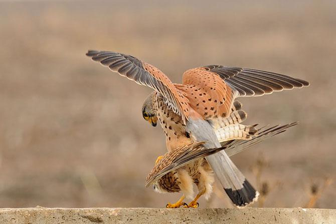 Natura vazuta de Uri Kolker: 28 de fotografii - Poza 5