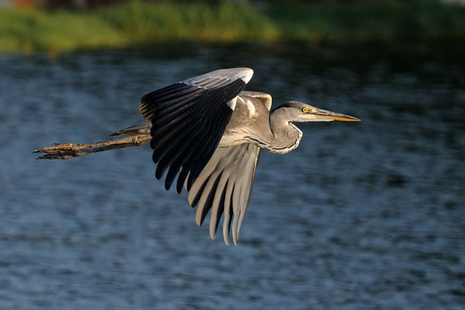Natura vazuta de Uri Kolker: 28 de fotografii - Poza 6
