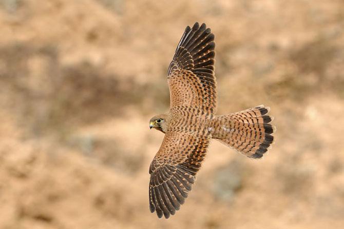Natura vazuta de Uri Kolker: 28 de fotografii - Poza 8