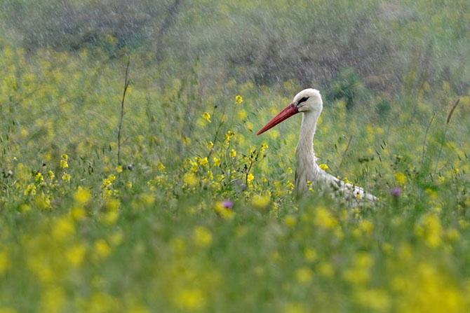 Natura vazuta de Uri Kolker: 28 de fotografii - Poza 9
