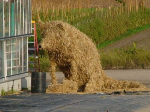 Cand fermierii se plictisesc... - Poza 13