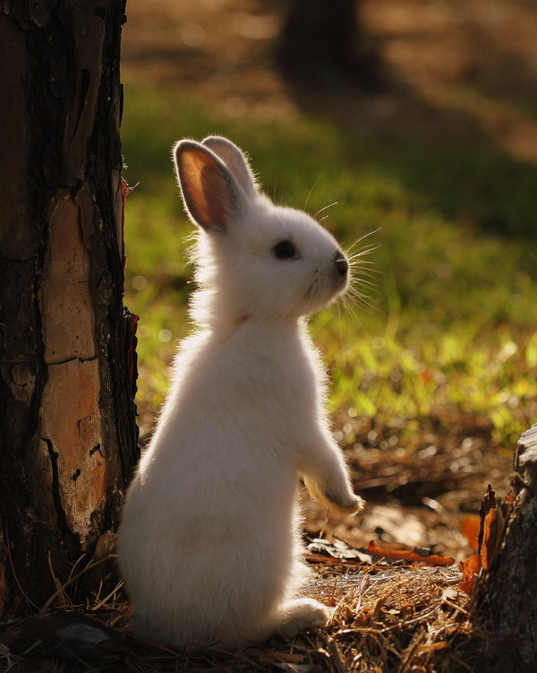 Atentie: Animale simpatice in 45 de poze! - Poza 42