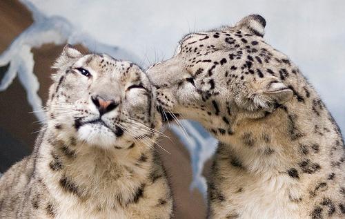 33+1 poze: Animale adorabile prin zapada - Poza 32